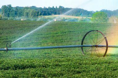 В КБР директор сельхозпредприятия похитил 90 млн рублей из субсидии